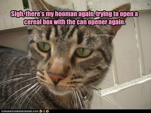 adoption,captions,human,Cats,can opener,cereal