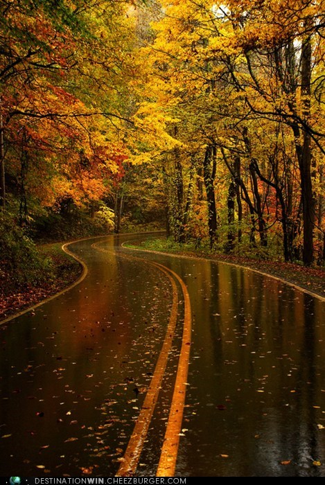 fall road leaves seasons - 6628573184