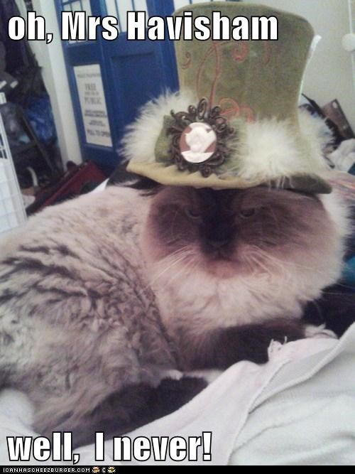 captions,Cats,fancy,Great Expectations,hat,oh you fancy huh,victorian