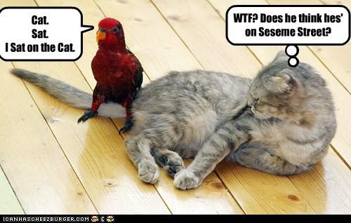 parrot sitting rhyme Sesame Street wtf SAT cat - 6628766464