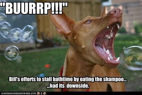 """BUURRP!!!"" Bill's efforts to stall bathtime by eating the shampoo... ...had its downside."