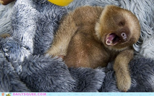 yawn baby lazy tired sloths blanket squee - 6629047552