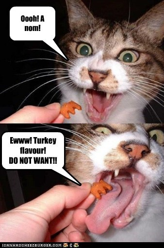 Oooh! A nom! Ewww! Turkey flavour! DO NOT WANT!!
