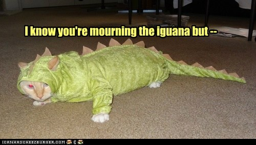 captions Cats costume dead iguana mourn replacement