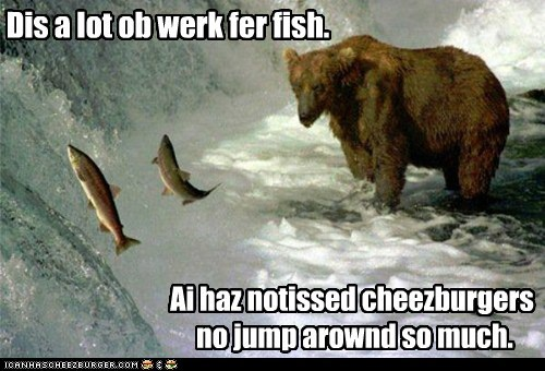Bear meme of a large brown grizly bear saying that catching salmon is hard work and would be just easier to have a cheezburger.