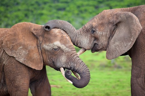 friends pat on the back elephants trunks squee - 6629174272
