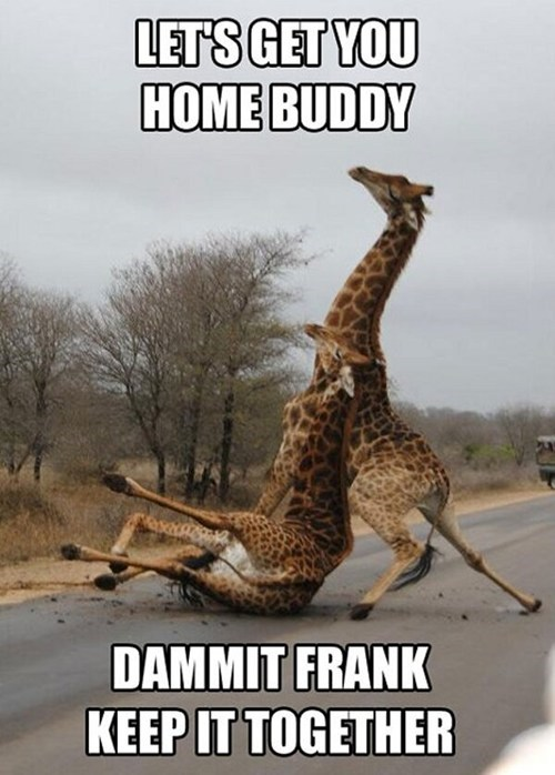 captions,drunk,fall,falling,friends,giraffes,helping,roads,wasted
