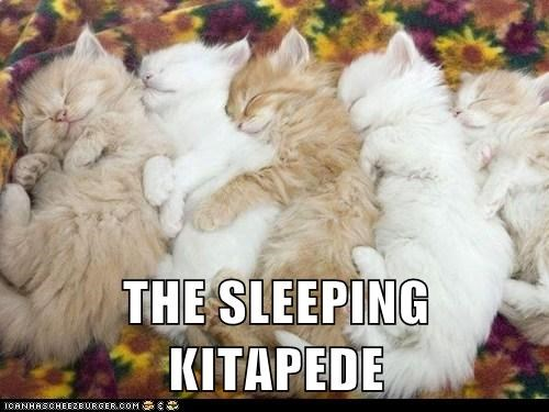 captions,Cats,centipede,kitten,sleep,staff picks,tired