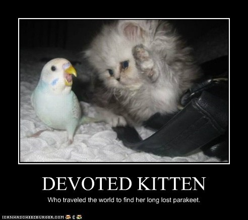 DEVOTED KITTEN Who traveled the world to find her long lost parakeet.