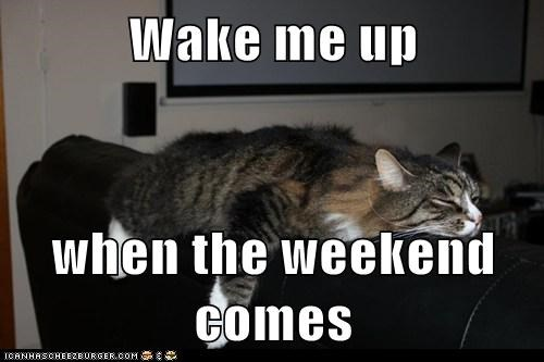 Wake me up when the weekend comes - Lolcats - lol | cat memes ...