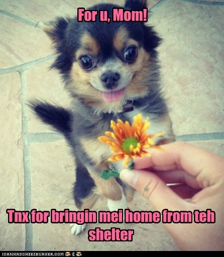 For u, Mom! Tnx for bringin mei home from teh shelter