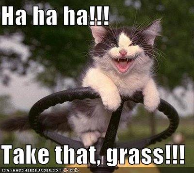 cute grass kitten lawnmower lolcats lolkittehs murder - 662972672