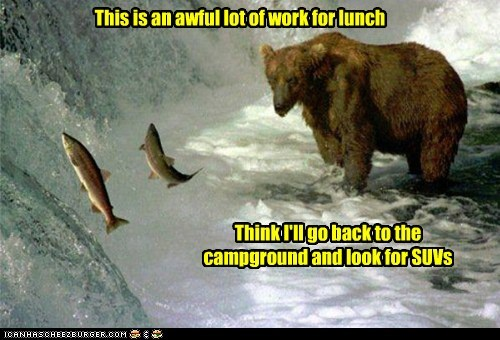 bear,fish,work,lunch,lazy,camping,suvs
