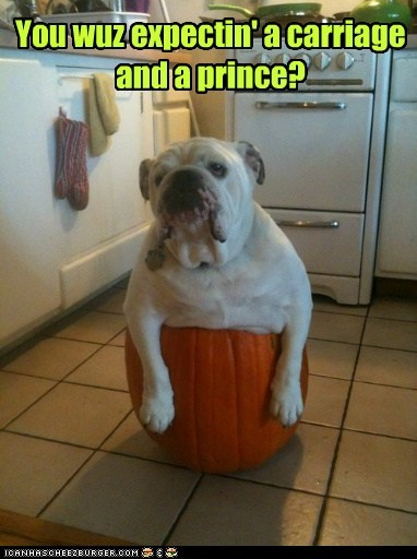 disappointment dogs pumpkins prince charming bulldog prince expected