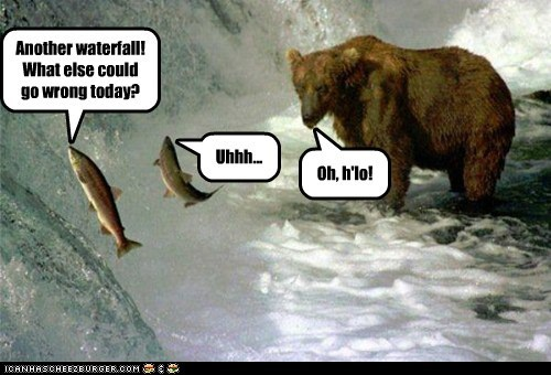 hello,bear,wrong,bad day,waterfall,eating,fish