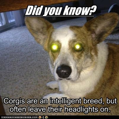 dogs did you know headlights corgi laser eyes
