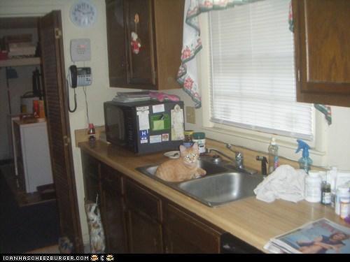 Cheezburger Image 6630600192