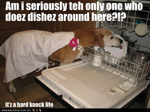 dishwasher,dogs,chores,licking,what breed