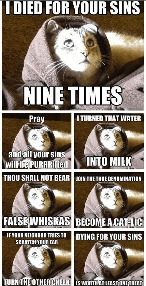 captions Cats jesus jesus kitty Memes puns religion - 6631736576
