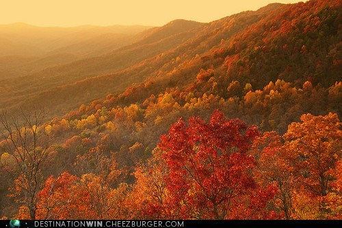 fall,hills,pretty colors,landscape