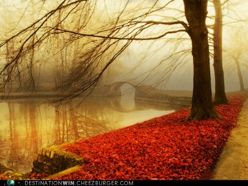 seasons,fall,bridge,park