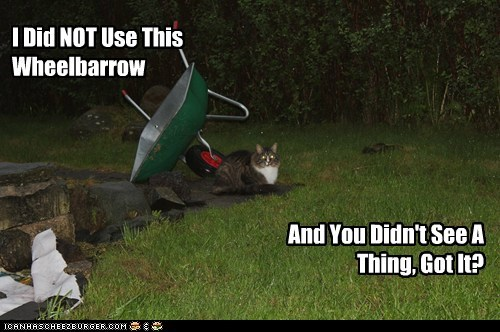 I Did NOT Use This Wheelbarrow And You Didn't See A Thing, Got It?