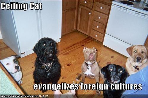 Cheezburger Image 663332608