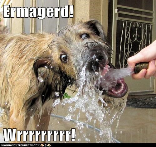 Ermahgerd,water hose,goggie,dogs,categoryimage