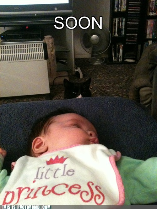 animal baby cat categoryimage SOON - 6634343424