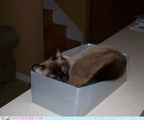 reader squee pet squee cat shoebox if i fits i sits