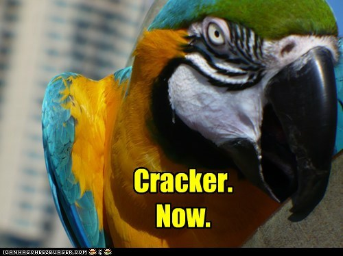 parrot,cracker,rude,now,demanding,caviar,angry