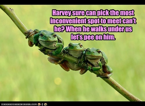 pee,branch,meet,Harvey,inconvenient,frogs