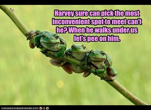 pee branch meet Harvey inconvenient frogs - 6635430144