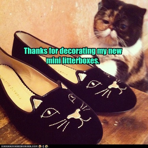captions Cats flats litter box mini shoes thank you categoryimage - 6635468032