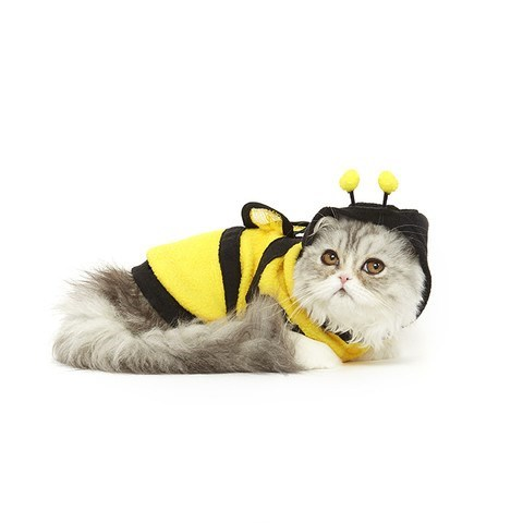 cats in halloween costumes, cat dressed as a bee
