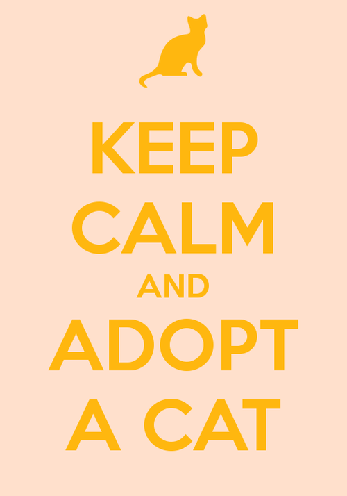 adoption Cats keep calm posters sayings slogans - 6635611904