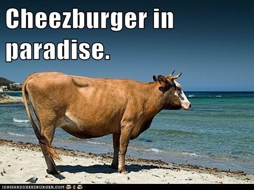 Cheezburger Image 6635840768