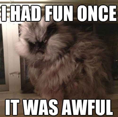 awful,captions,Cats,colonel meow,crazy,grumpy,i had fun once,once