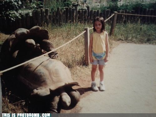 animals,girl,turtle