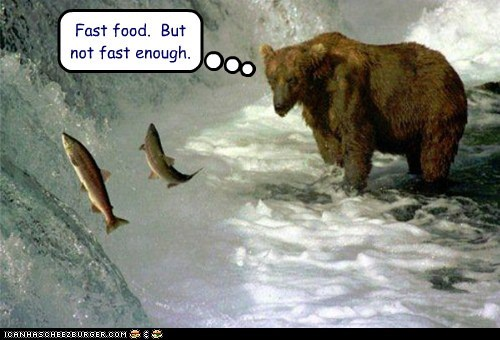 river,pun,salmon,bear,eating,fish,fast food,jumping