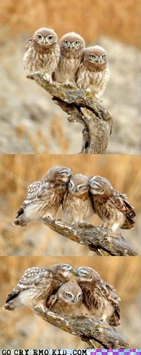 animals,forever alone,owls