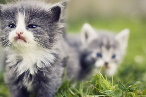 Cats,cyoot kitteh of teh day,exploring,frowning,frowns,grass,grumpy,kitten,two cats