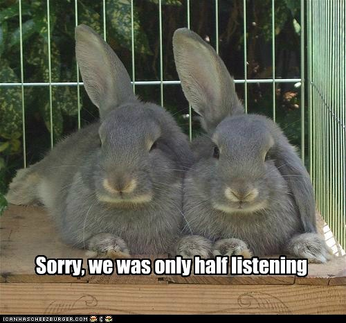 rabbits bunnies ears listening half sorry not paying attention - 6636816128