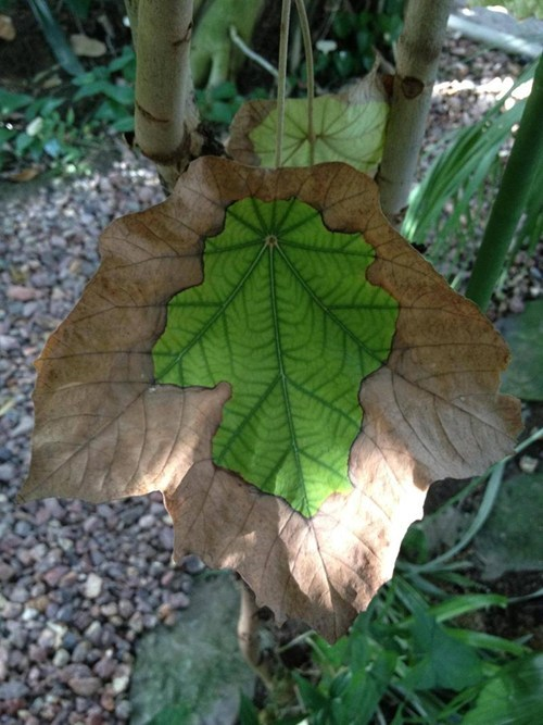 leaf,design,nature,mother nature ftw