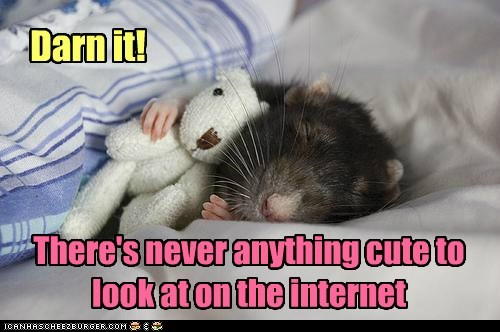 teddy bear darn it internet never cute hamster squee sleeping - 6637385984