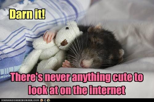 teddy bear darn it internet never cute hamster squee sleeping - 6637385984