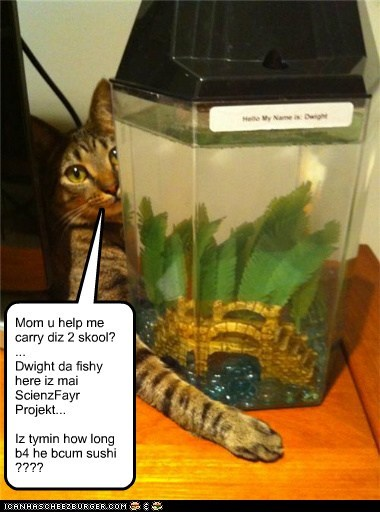 Mom u help me carry diz 2 skool? ... Dwight da fishy here iz mai ScienzFayr Projekt... Iz tymin how long b4 he bcum sushi ????
