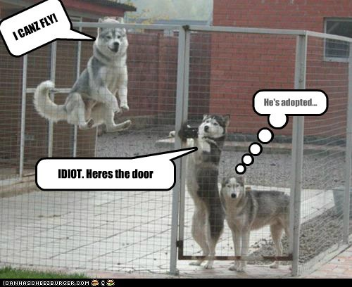 I CANZ FLY! IDIOT. Heres the door He's adopted...