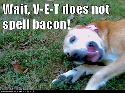 V-E-T does NOT spell bacon!