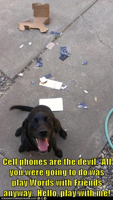 labrador destroyed package cell phone play with me - 6638935552